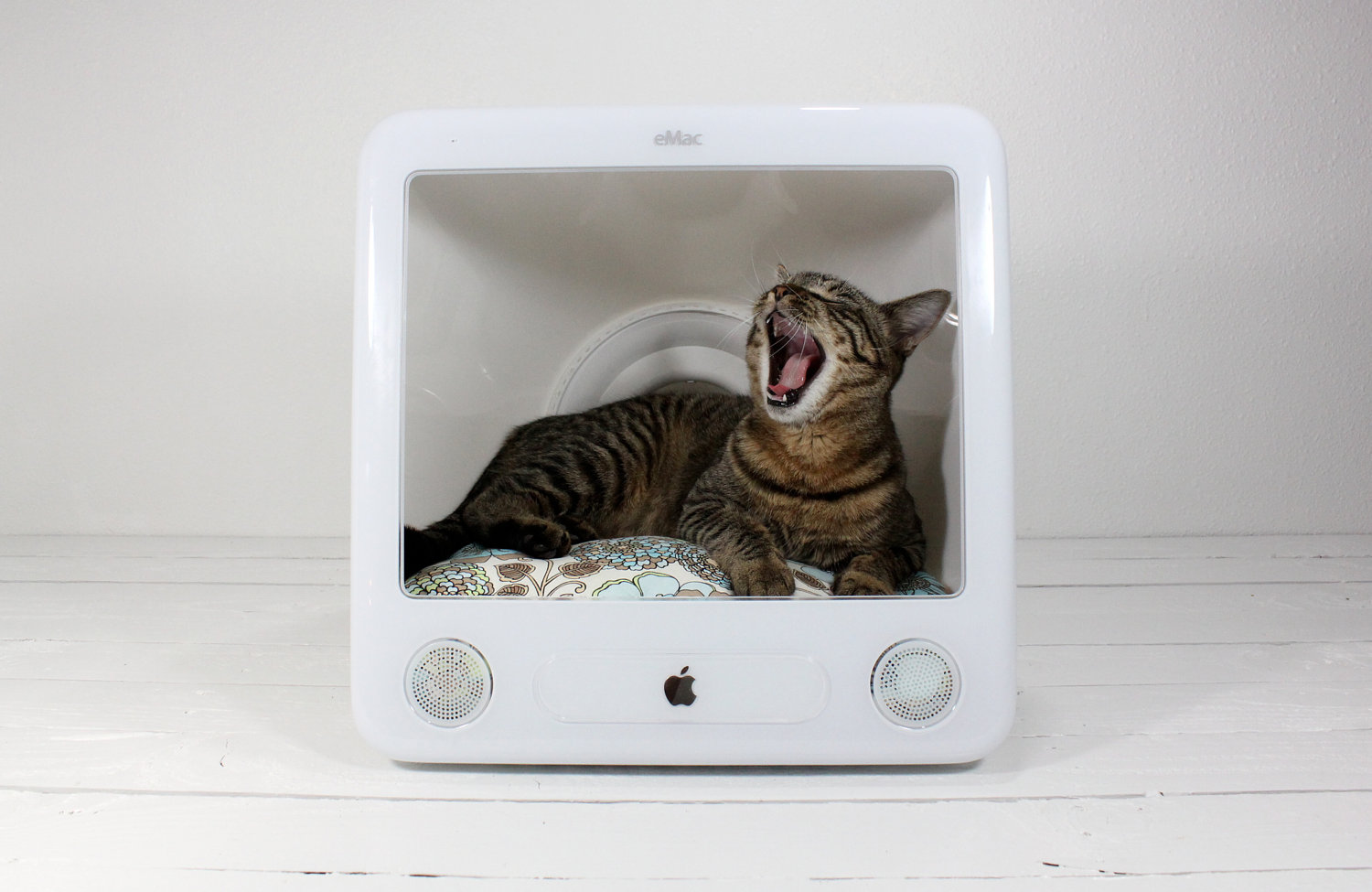 Cat in Mac